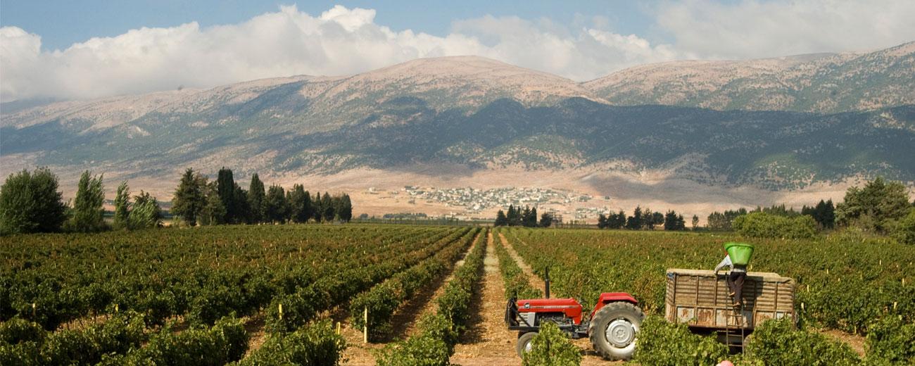 Weinkultur des Libanons