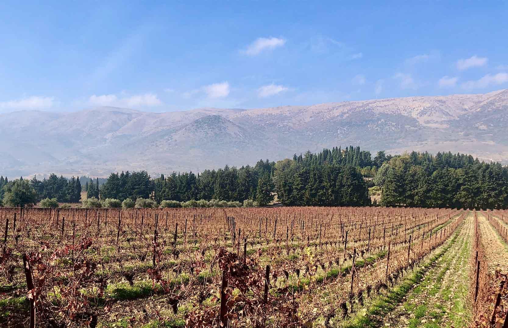 libanesische Weinfelder im Bekaa-Tal
