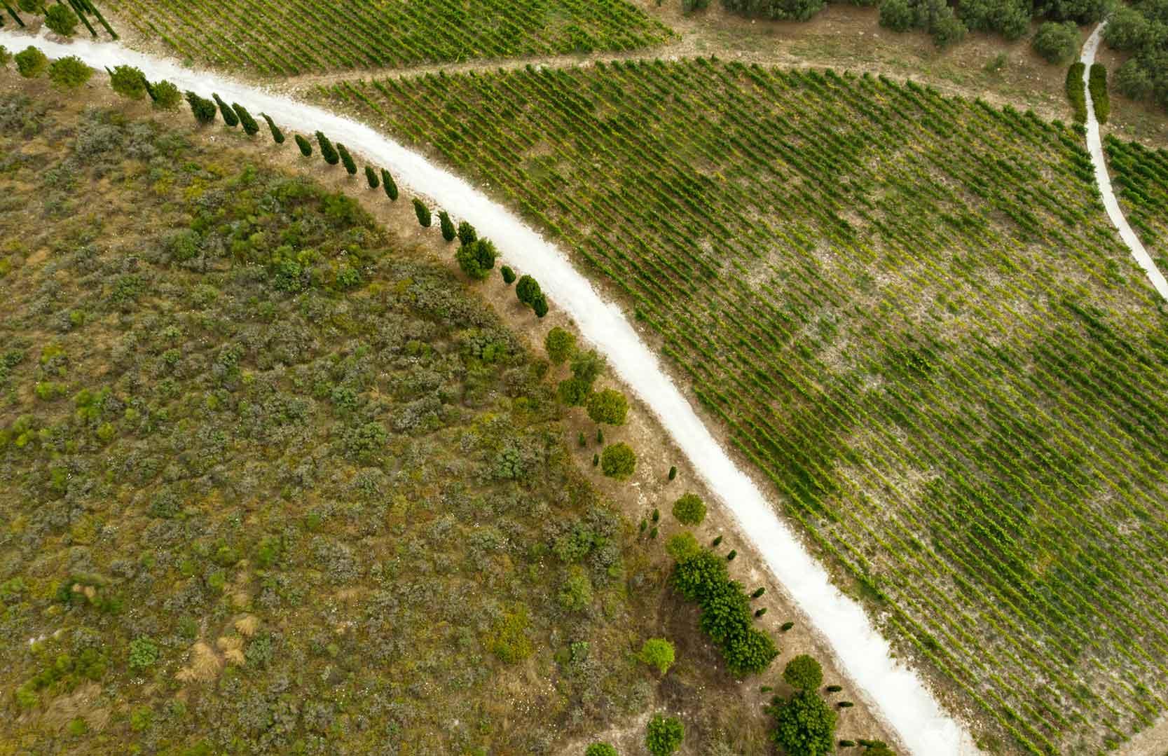 Einfahrt zum libanesischen Weingut in Batroun