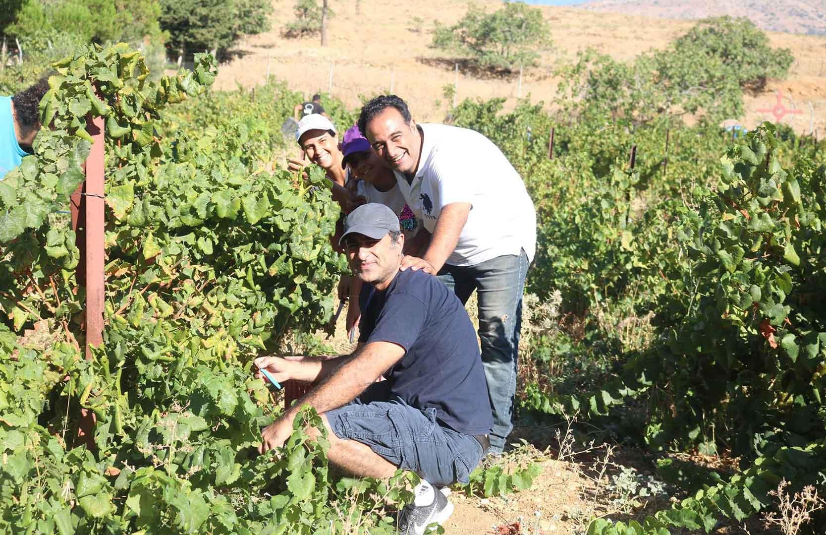 Wissam Touma und Dargham Touma bei der Weinlese