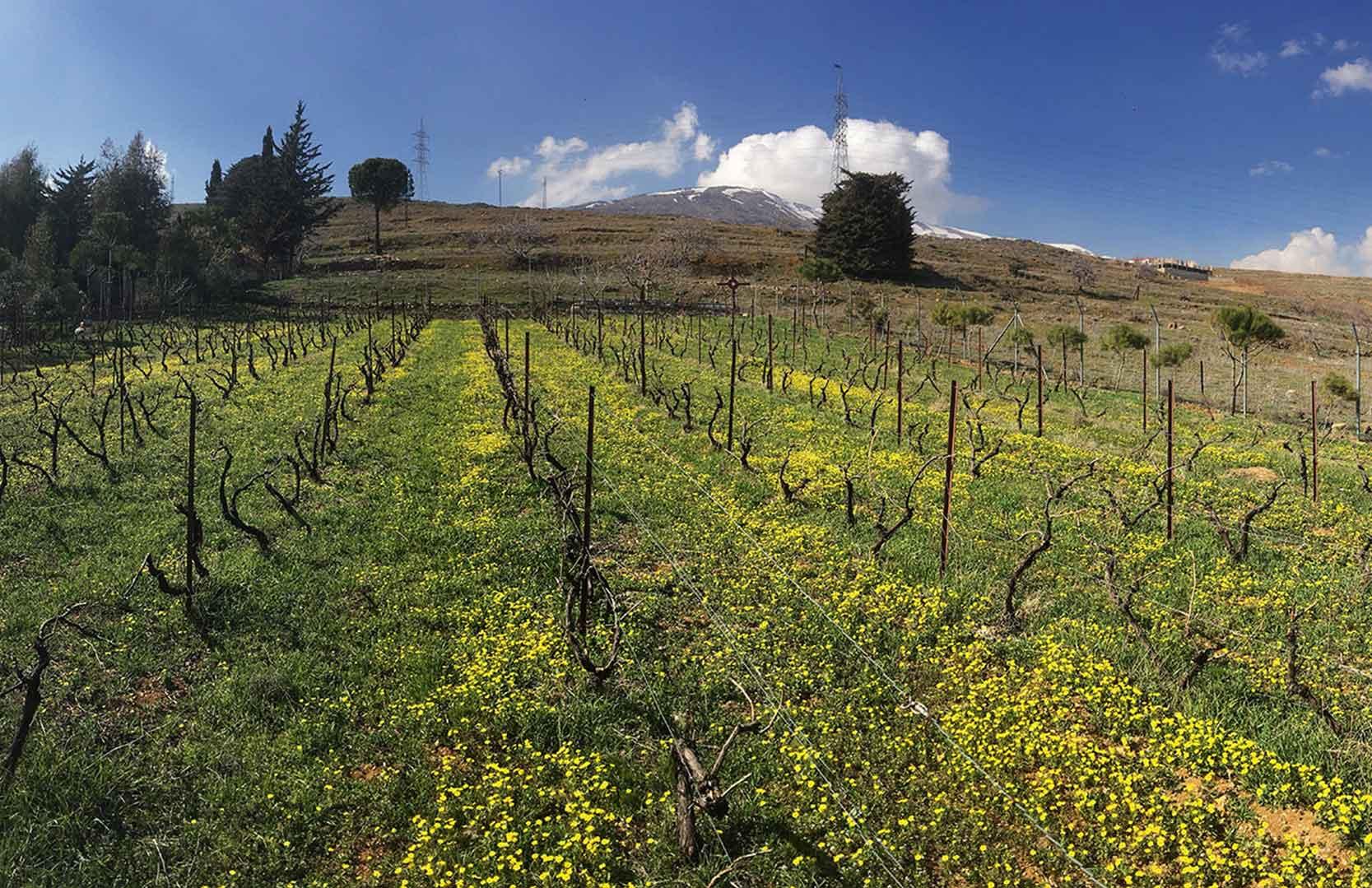 Weinfelder von Chateau Heritage