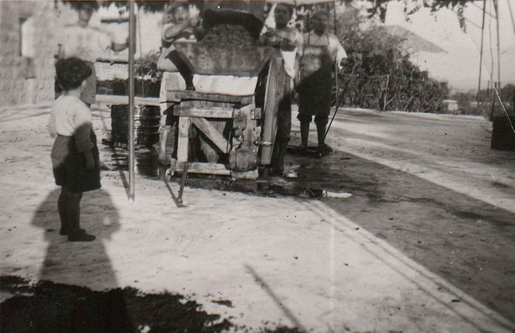 Transport der Trauben für Chateau Nakad