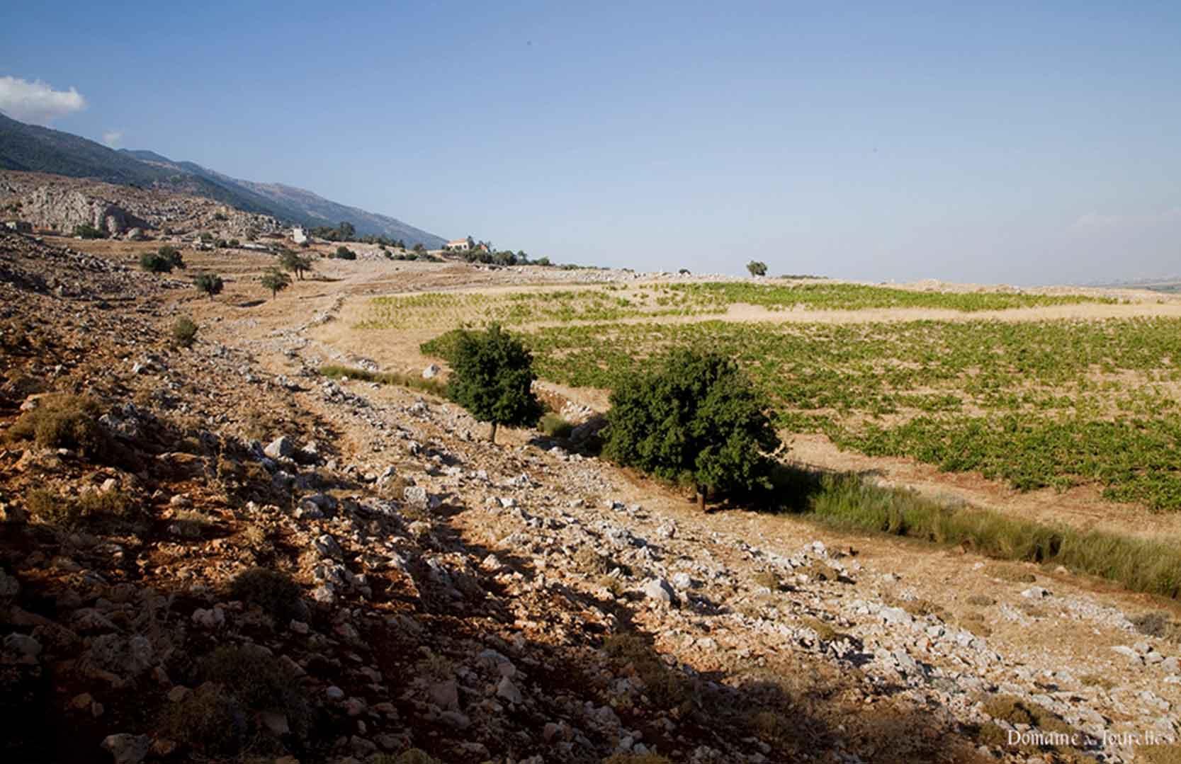 Weinfelder von Domaine des Tourelles im Libanon